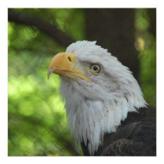 American Bald Eagle Invitation