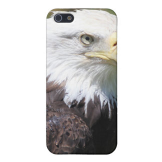 American Bald Eagle iPhone Case iPhone 5 Cover