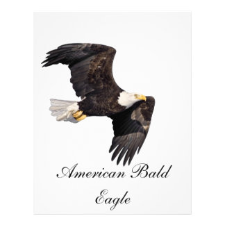 American bald Eagle Letterhead