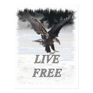 American Bald Eagle - Live Free Postcard