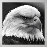 American Bald Eagle Motivational Leadership Poster