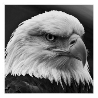 American Bald Eagle Motivational Leadership Poster