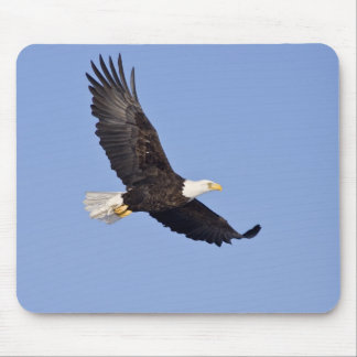American Bald Eagle Mouse Pads