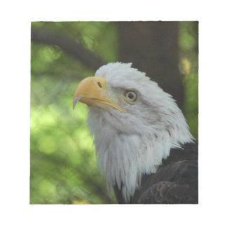American Bald Eagle Notepad