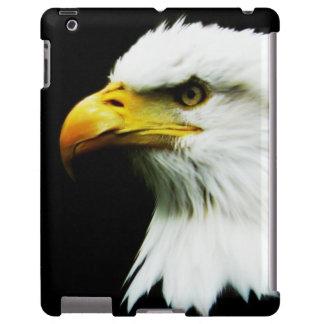 American Bald Eagle on Black