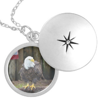 American Bald Eagle Perched on a Log Necklaces