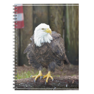 American Bald Eagle Perched on a Log Note Book