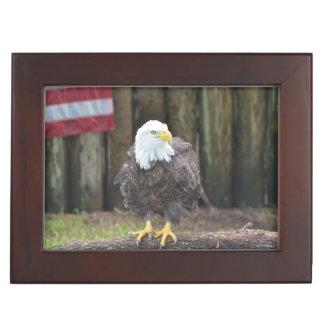 American Bald Eagle Perched on a Log Memory Box