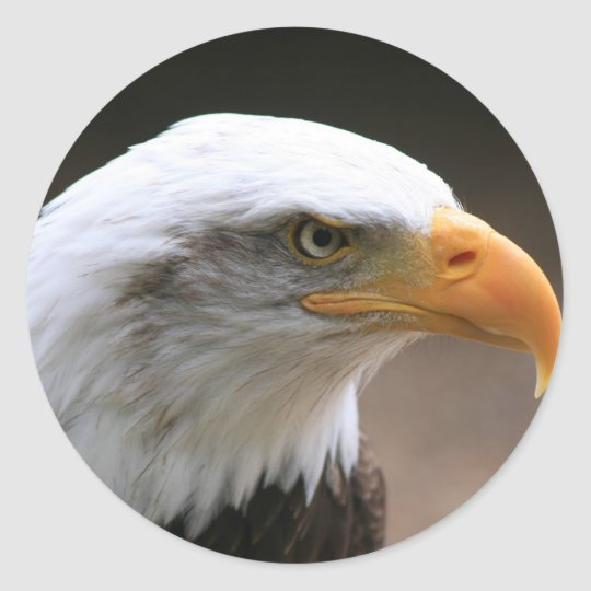 american Bald Eagle Portrait Classic Round Sticker