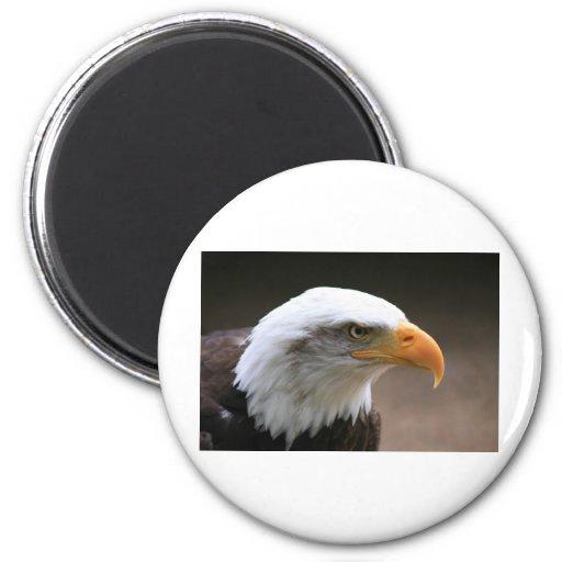 american Bald Eagle Portrait Refrigerator Magnet