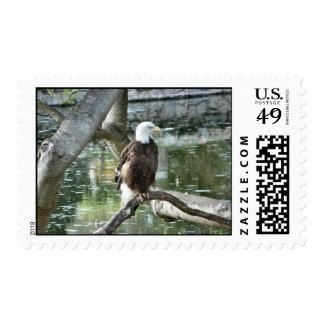 American bald eagle postage stamp