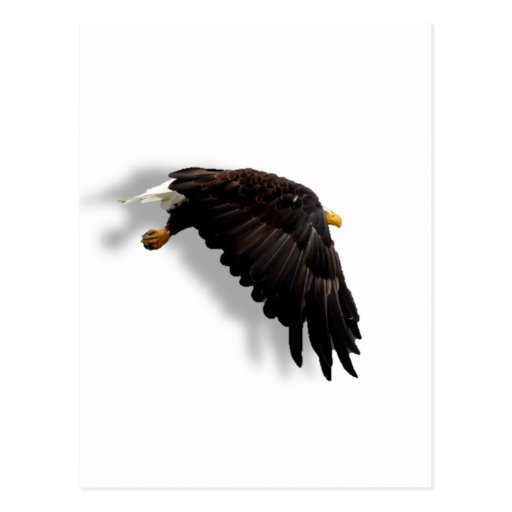 American Bald Eagle Post Cards