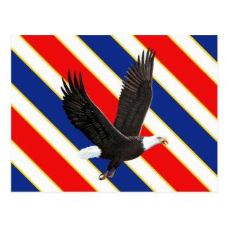 American Bald Eagle Post Card