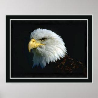 American Bald Eagle Poster