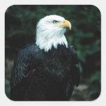 American Bald Eagle Square Sticker