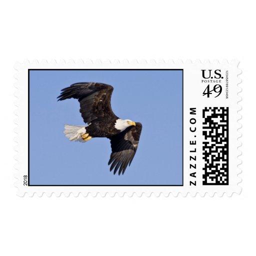 American bald eagle stamp