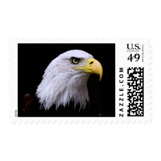 American Bald Eagle Stamps