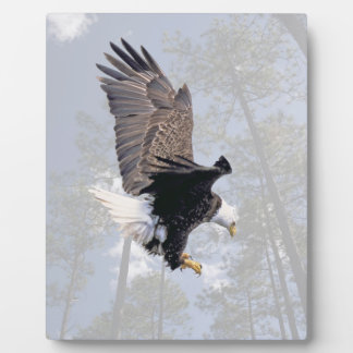 American Bald Eagle Symbol Of The United States Plaque