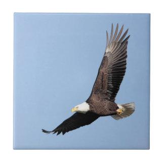 American Bald Eagle Tile