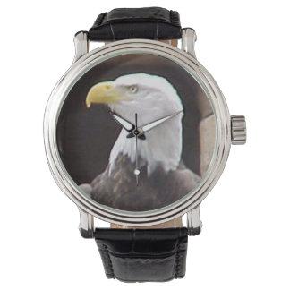 American Bald Eagle Watch