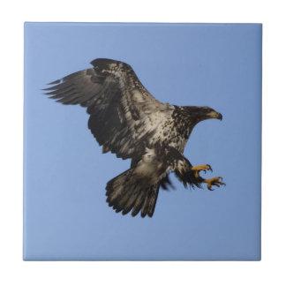 American Bald Eagle Wildlife Tile