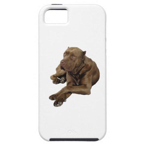 American Bandogge Mastiff iPhone 5 Cover