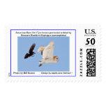 American Barn Owl (Tyto furcata pratincola) Postage