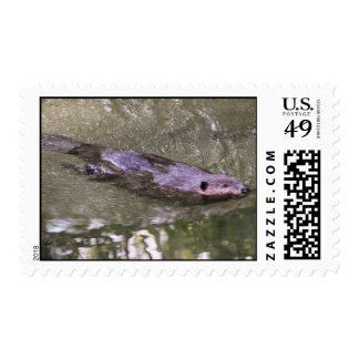 American Beaver Postage Stamps