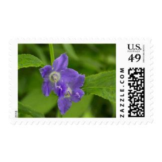 American Bellflower Purple Wildflower Postal Stamp