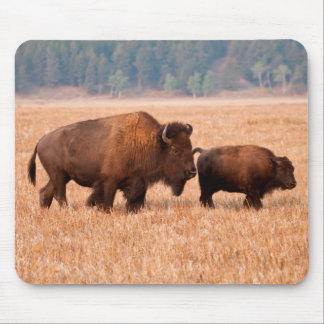 American Bison (Bison Bison) Cow And Calf Mouse Pad
