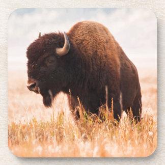 American Bison (Bison Bison) Herd In Teton 2 Drink Coaster