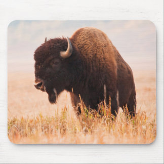 American Bison (Bison Bison) Herd In Teton 2 Mouse Pad