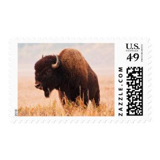 American Bison (Bison Bison) Herd In Teton 2 Postage Stamp