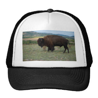 American Bison (Bison bison) - Wichita Trucker Hat