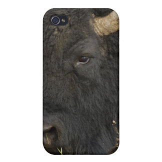 American Bison 'Buffalo' Bison bison), male, iPhone 4 Covers