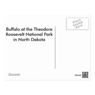 American Bison (Buffalo) Postcard