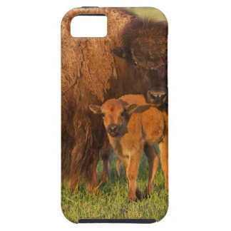 American Bison cow and calf, North Dakota iPhone 5 Case