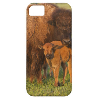 American Bison cow and calf, North Dakota iPhone 5 Cases
