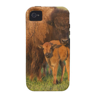 American Bison cow and calf, North Dakota iPhone 4/4S Covers