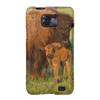 American Bison cow and calf, North Dakota Samsung Galaxy S Cases
