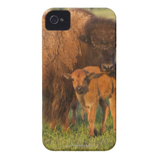 American Bison cow and calf, North Dakota Blackberry Bold Cover