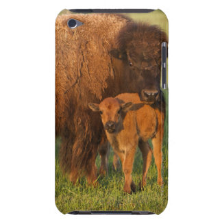 American Bison cow and calf, North Dakota iPod Case-Mate Cases