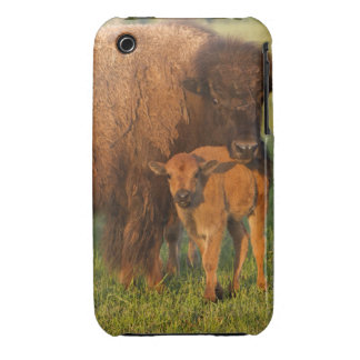 American Bison cow and calf, North Dakota Case-Mate iPhone 3 Cases