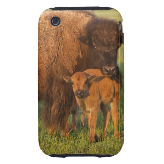 American Bison cow and calf, North Dakota Tough iPhone 3 Case