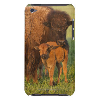 American Bison cow and calf, North Dakota iPod Touch Case