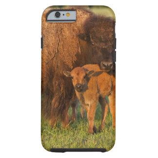 American Bison cow and calf, North Dakota iPhone 6 Case