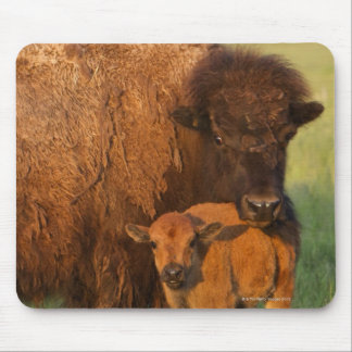 American Bison cow and calf, North Dakota Mouse Pad