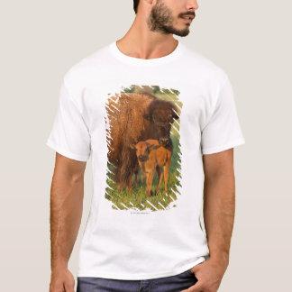 American Bison cow and calf, North Dakota T-Shirt