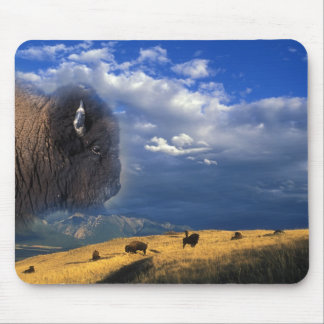 American Bison grazing in Montana Mouse Pad