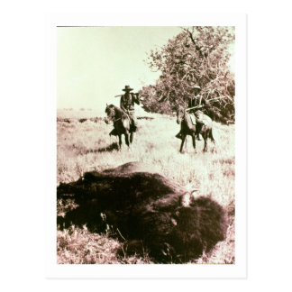 American Bison Hunters (b/w photo) Postcard